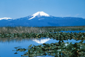Upper_Klamath_National_Wildlife_Refuge