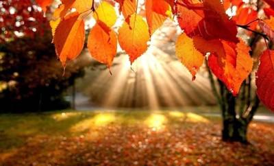 bosco-nel-mese-di-novembre